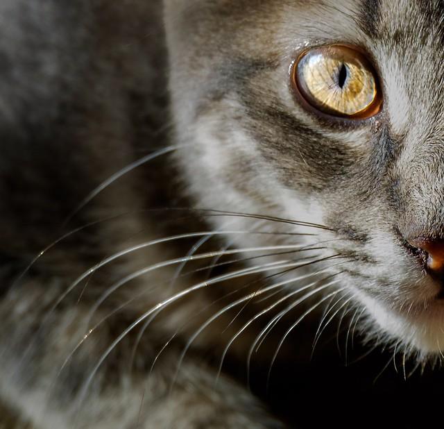 Mighty Hunter Kitten, Fujifilm X-E2, XC50-230mmF4.5-6.7 OIS