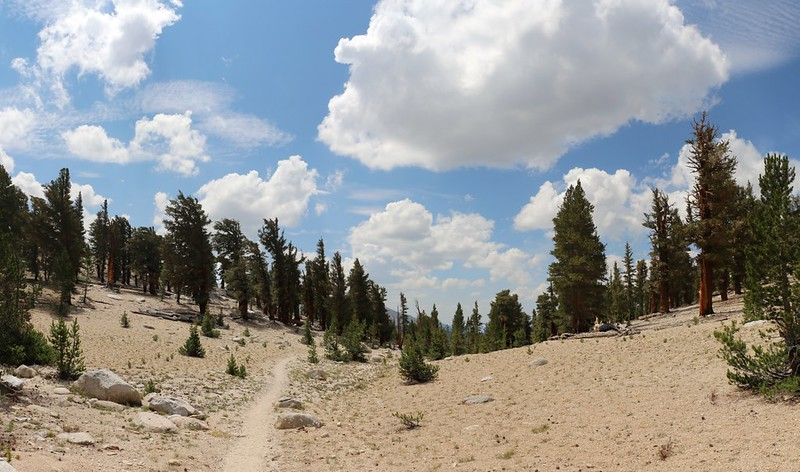 Cumulus Clouds begin to form as I hike south on the John Muir Trail toward Crabtree Meadow
