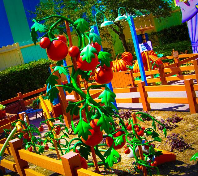 Mickeys Tomato Plants At, Nikon COOLPIX P3