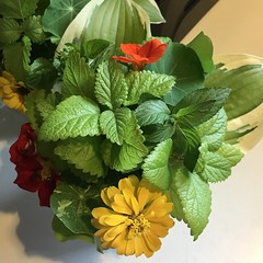 Image by valatal (vmolloy) and image name summer garden arrangements: hosta leaves, nasturtium, ketchup & mustard roses, zinnias, orange mint, mint, & lemon balm - #grewitmyself #summerflowers photo