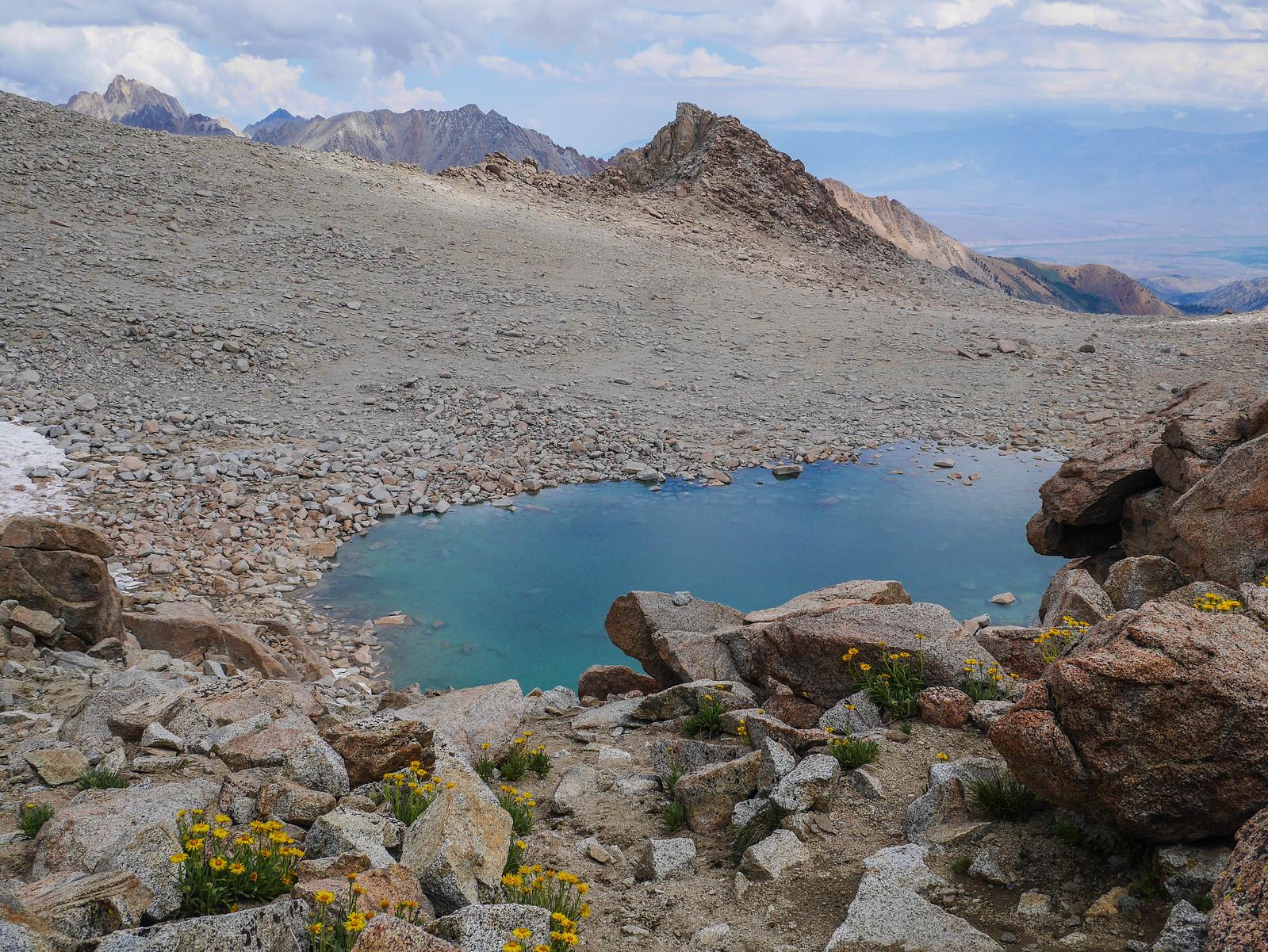 Alpine gold and the tarn below Lamarck Col