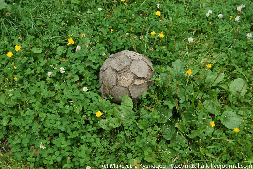 Старый мяч