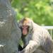 원숭이 MONKEY