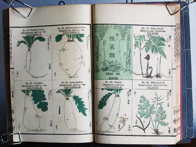 田中芳男+小野職愨『有用植物圖説』卷一 明治40年四版(その1 後半)