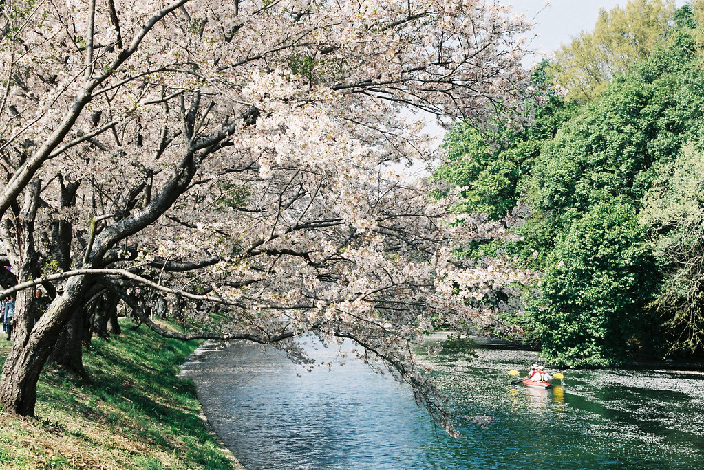Sakura and kayak