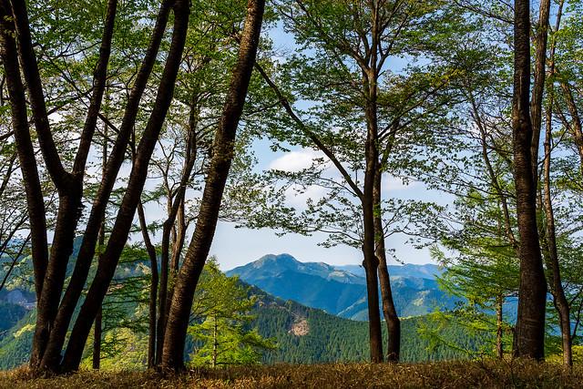 若葉の木々間から伊豆ヶ岳