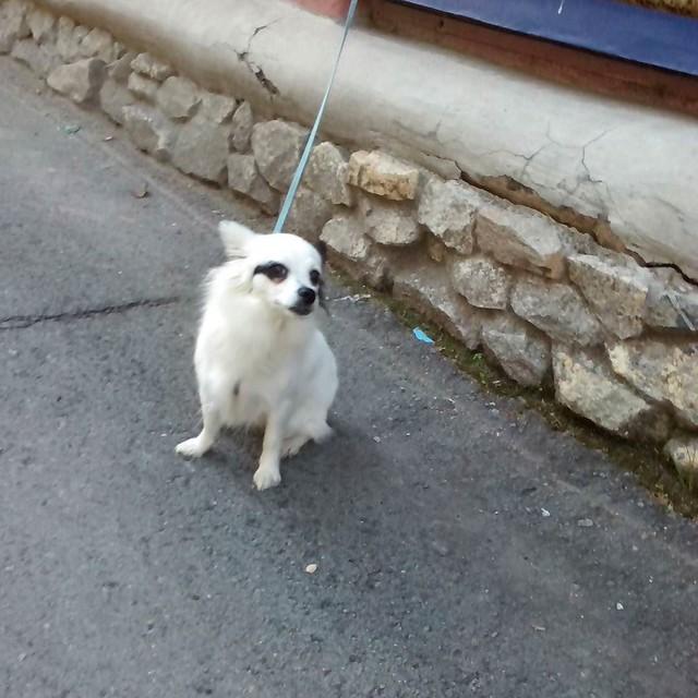 Зайку бросила хозяйка сидит у магазина зайка