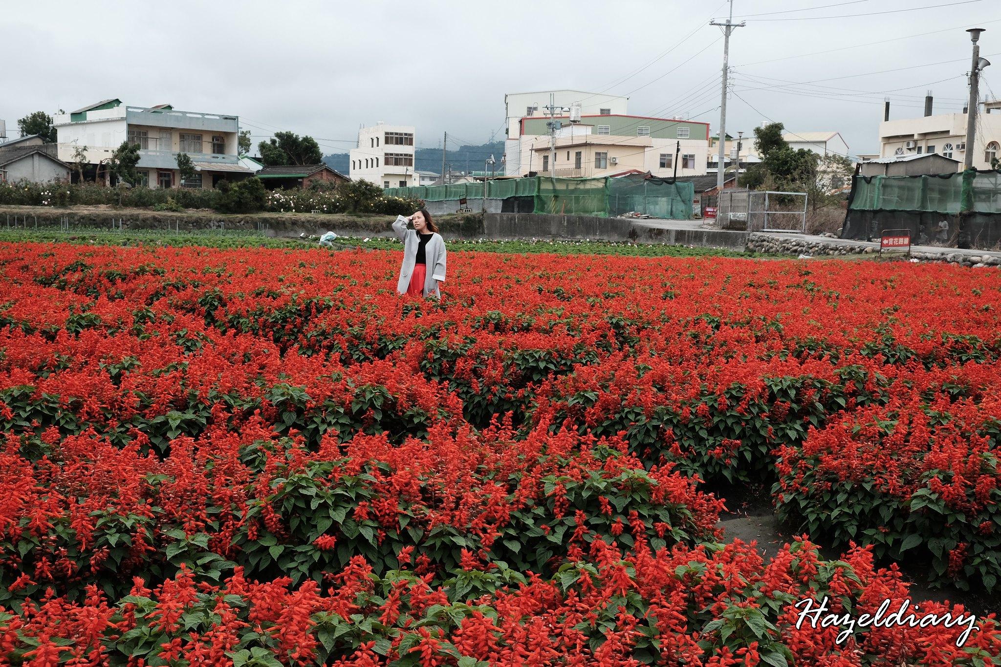 Zhong She Guan Guang Flower Market Taichung Taiwan-9