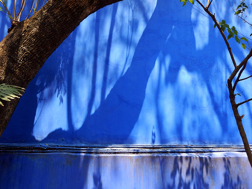 Shadows of a tree on the wall of the artist Frida Kahlo's 'Casa Azul', the cobalt blue house in Coyoacán, Mexico