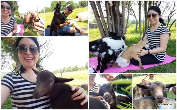 Haute Goat yoga selfies