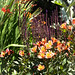 Alstroemeria and other flowers