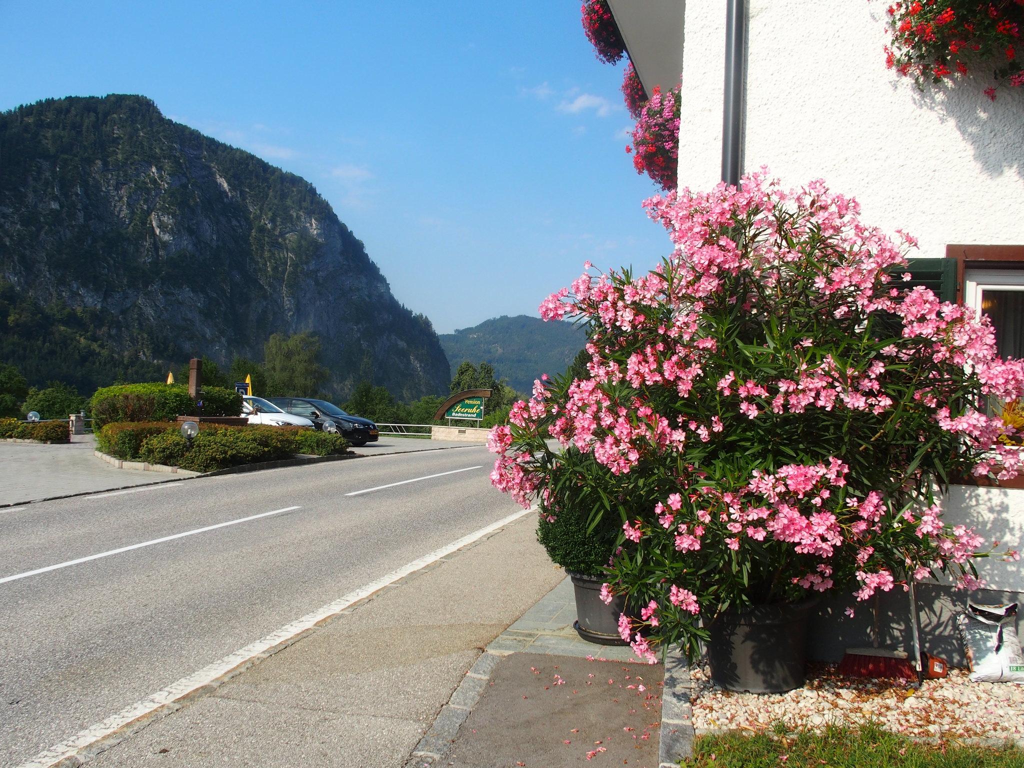 Hotell blomster