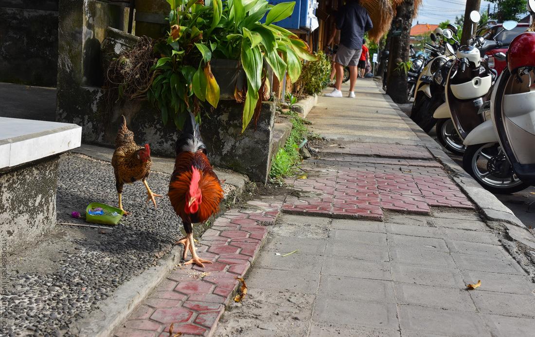 Bali-Ubud-(63)