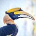 Great Hornbill (Buceros bicornis) at the Reid Park Zoo in Tucson by Jim Frazee