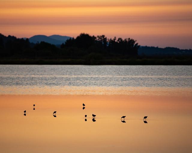Birds on Fern Ridge, Canon EOS 6D, Canon EF 70-200mm f/4L IS
