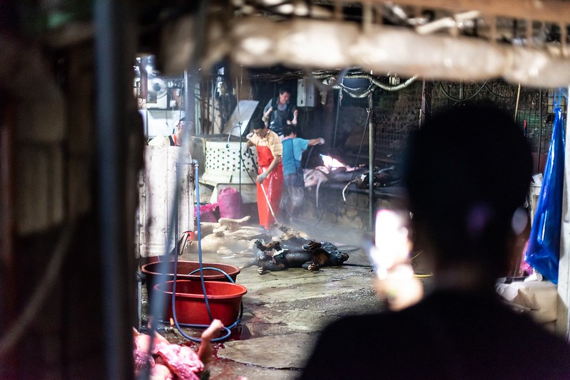 Seongnam Taepyeong-dong Dog Slaughterhouse