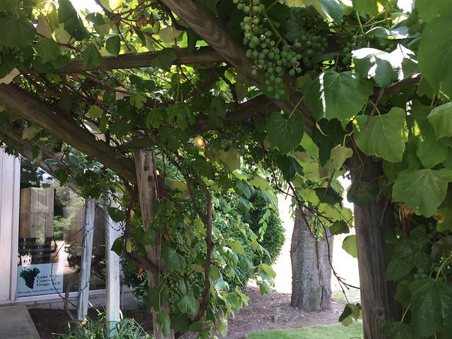 Penn Shore Winery and Vineyard Pergola