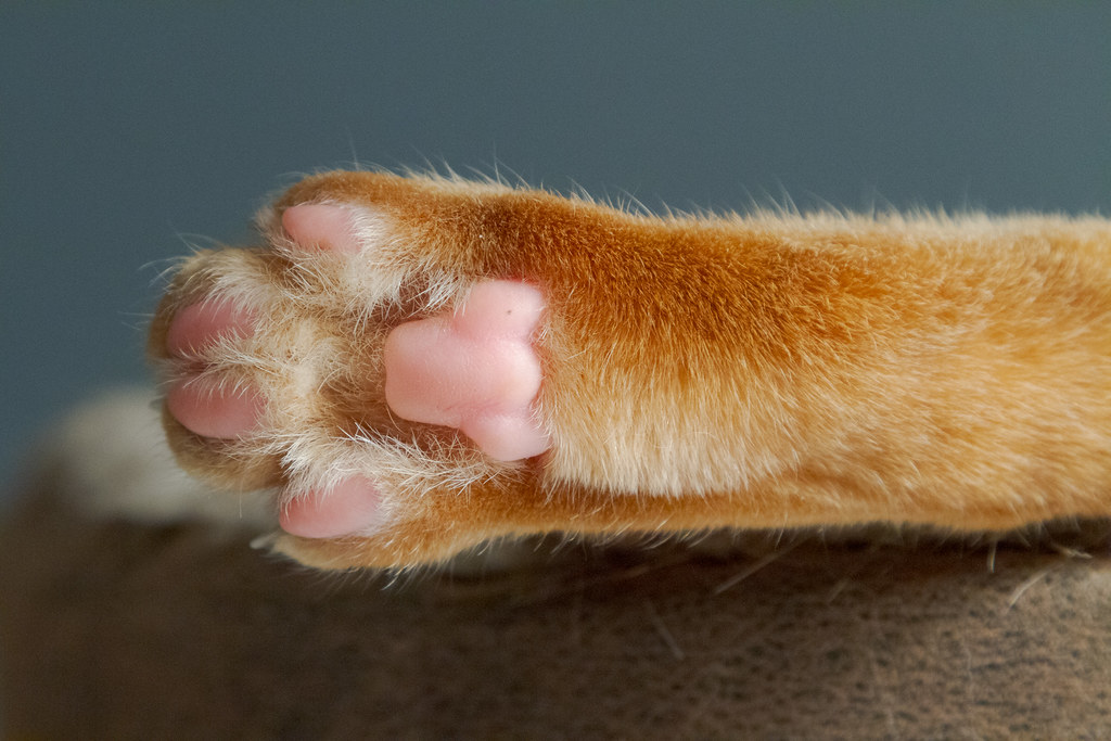 The paw pads on one of the paws of our cat Sam