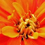 6 - Orange