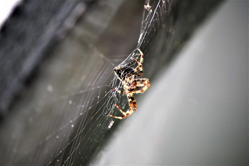 Spider 25.07 (1)