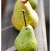 parade of pears