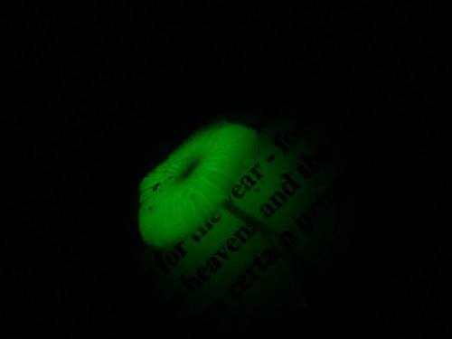Natural llumination by Shannan Mortimer, on Flickr