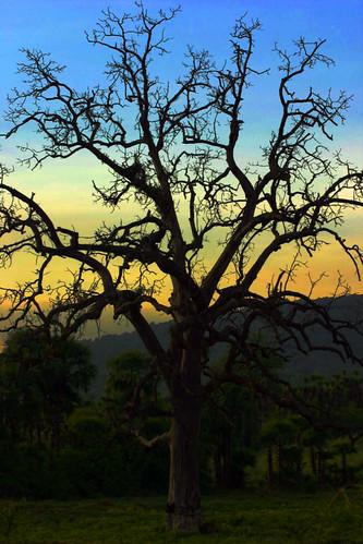 life sunset india tree efatima fatimahadi abigfave