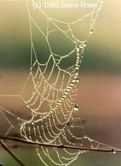 Webs & Abstracts