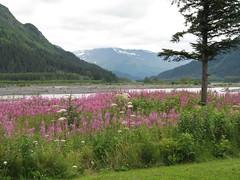 SEWARD ALASKA AND WINDSONG LODGE