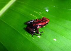 Qué-es-la-Lista-Roja-de-la-UICN-b