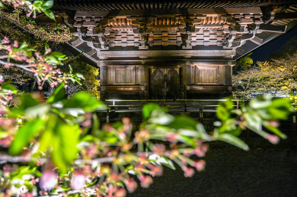 Blurred flower Pagoda door Toji