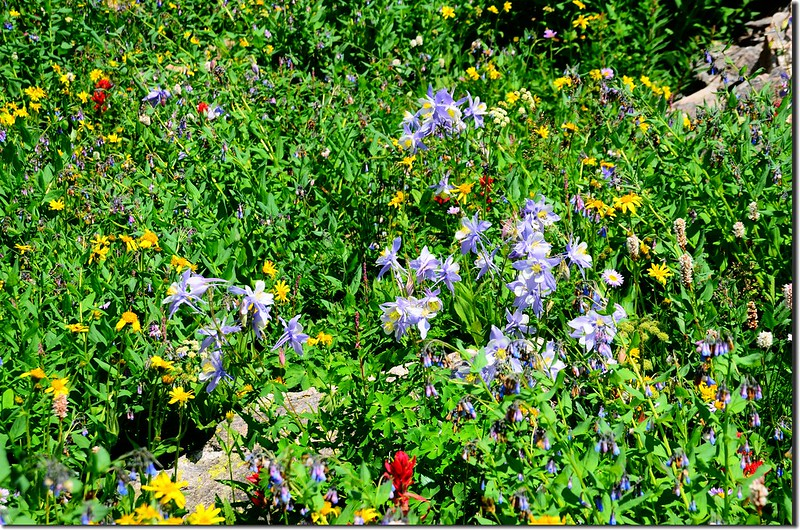 Wildflowers are blooming along the trail (4)