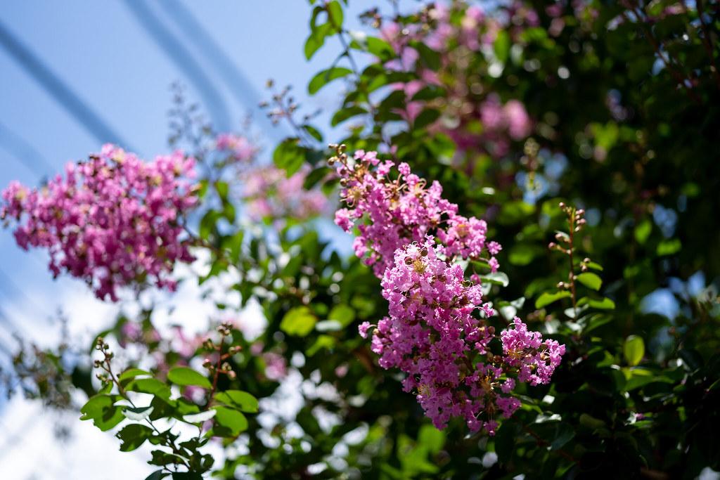 Loxia 2.4/85 Inokashira Park 6