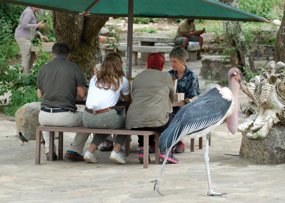 marabou-stork (2)