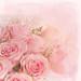 Roses for Friday by BirgittaSjostedt