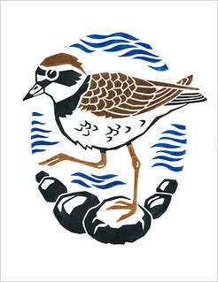 Ringed Plover in colour (2)