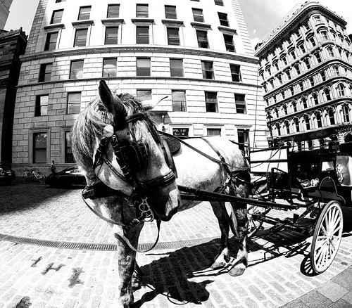Horse in Old Montreal