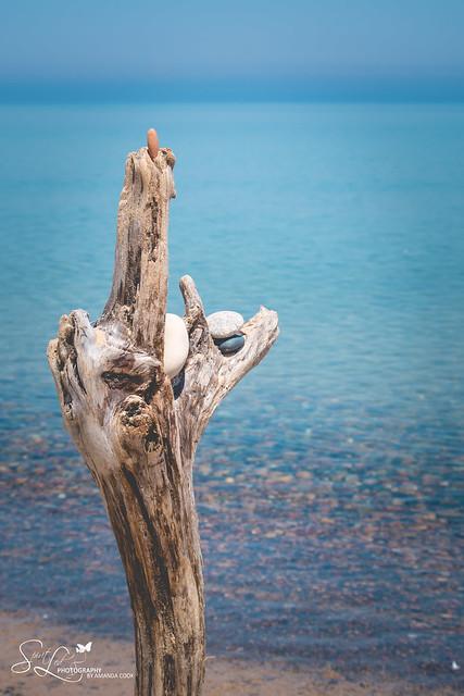 Whitefish Point Driftwood Art