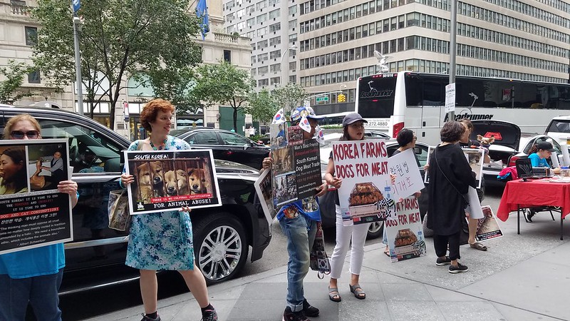 New York, South Korean Consulate General, 'Boknal' Demonstration for the South Korean Dogs and Cats (Day 2) – July 30, 2018 Organized by The Animals' Battalion