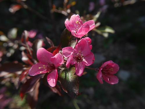 explosion florale - Page 3 40701526085_80b03c06df