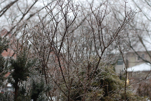 Ice accretion in April storm