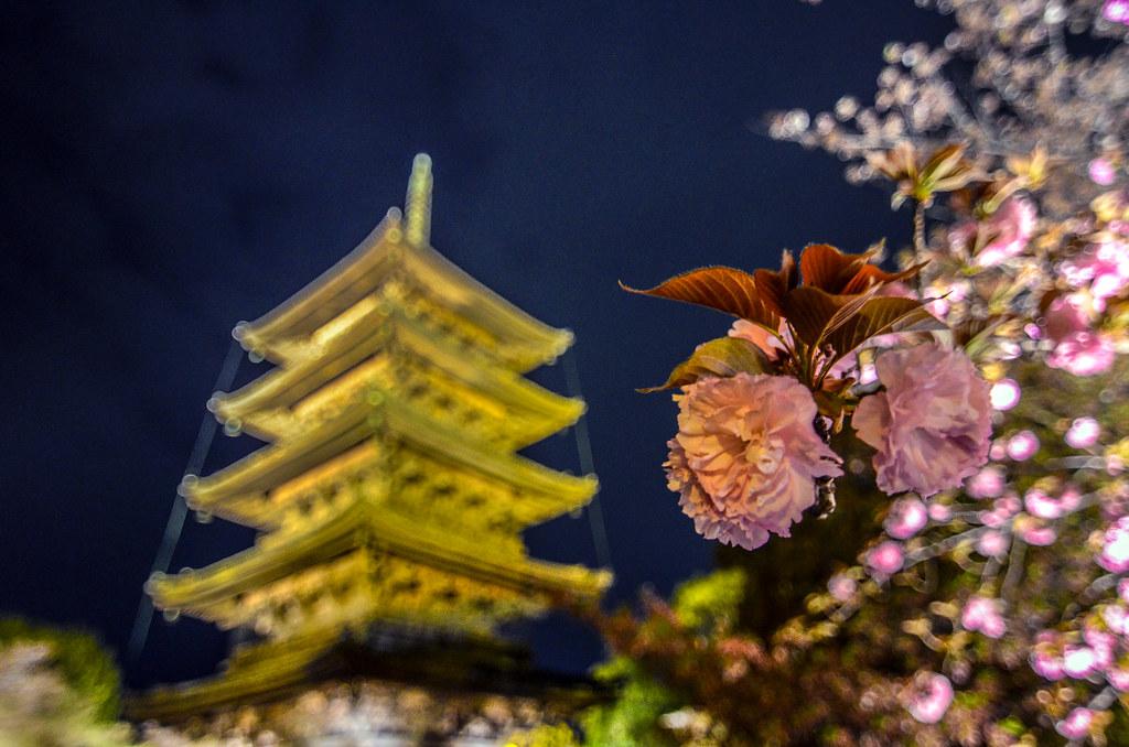Blossom blurred pagoda