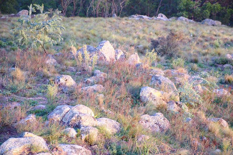Rocks, Mt Kanimbla at sunrise