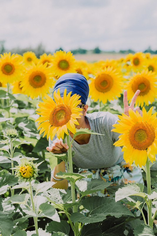 bogle seeds sunflower farm