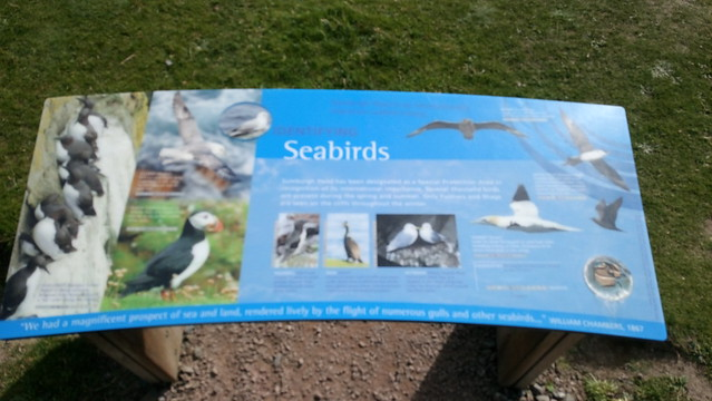 Sumburgh - Shetland
