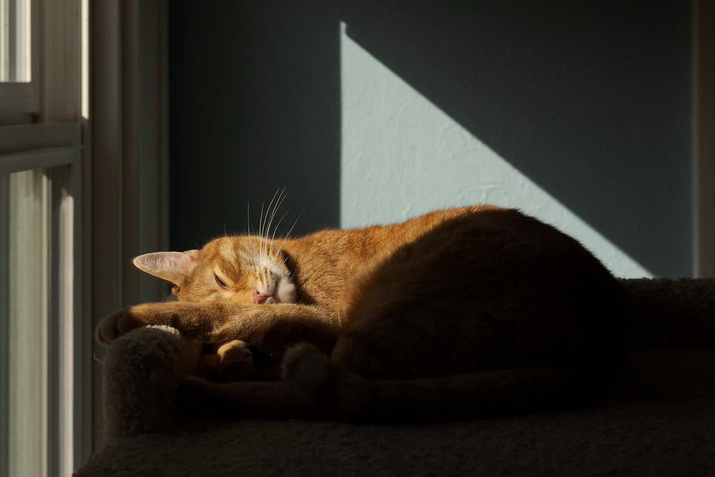 Light makes a patten like the sail on a sailboat behind our cat Sam as he sleeps atop the cat tree