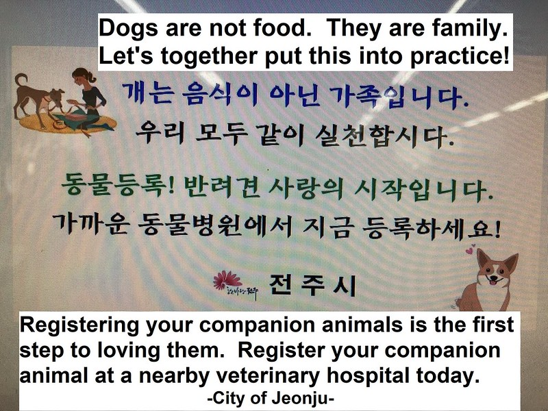 Jeonju going dog meat free 072018 (10a)