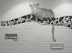 Endangered Species Artwork in Oxford