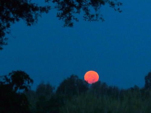 Blood Buck Moon setting 20180727