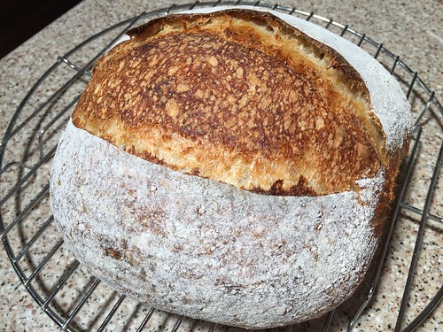 Sonora whole wheat (16%)